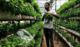 المهندس الزراعي الفلسطيني باسل عمارنة